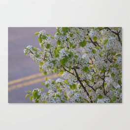 Blossoms on Third Avenue Canvas Print