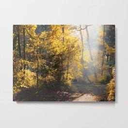 autumn forest morning light Metal Print