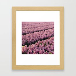 Hyacinth field Framed Art Print