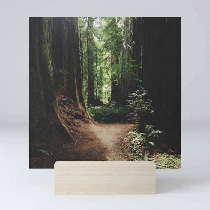 Redwood Trail Mini Art Print