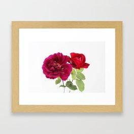 red roses Framed Art Print