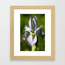 Wild Iris 2 Framed Art Print