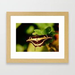Peppered Mint Framed Art Print