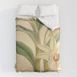 Dendrobium williamsonii Comforters