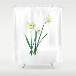 White Daffodils - 'Ice Follies' Botanical Illustration Shower Curtain