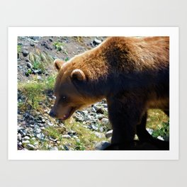 Griz - Wildlife Art Print Art Print