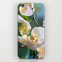 orchid iPhone & iPod Skins featuring Orchid by Joke Vermeer
