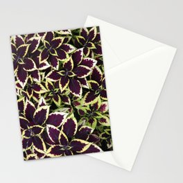 Coleus Plant Leavs Stationery Cards