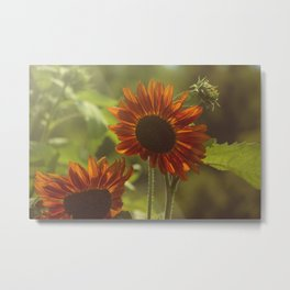 Red Sunflower II Metal Print