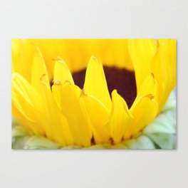 Sunflowers Face the Sun Canvas Print