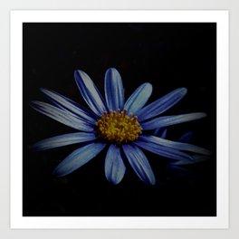 Blue Daisy On Black Art Print
