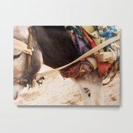 Donkey  Metal Print
