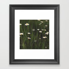 Daisy Days Framed Art Print