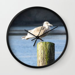 Gull in Pousbo, WA Wall Clock