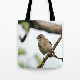 Young Chaffinch Songbird Bird Perching on a Branch - Wales, UK Tote Bag
