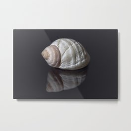 Seashell snail reflection Metal Print