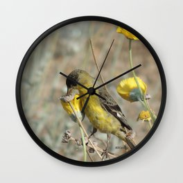 Mr. Lesser Goldfinch Feeds on Seeds Wall Clock