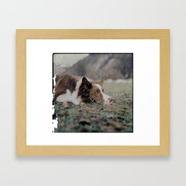 Kiva the dog Framed Art Print