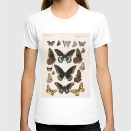 Vintage Scientific Insect Butterfly Moth Biological Hand Drawn Species Art Illustration T-shirt