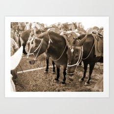 Donkeys in Santorini Art Print