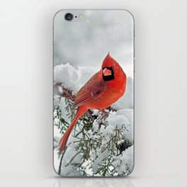 Cardinal on Snowy Branch (sq) iPhone Skin