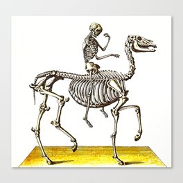 Horse Skeleton & Rider Canvas Print