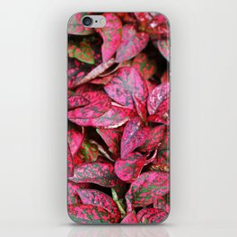 Hypoestes iPhone Skin