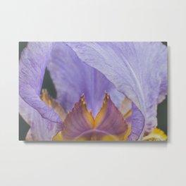 Iris Flower Metal Print