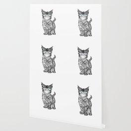 Scruffy Maine Coon Kitten Wallpaper