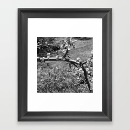 tree branch with Flowers Framed Art Print