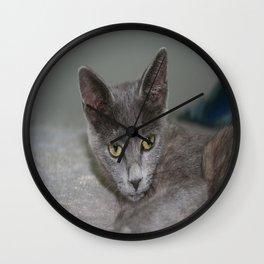 Beautiful Portrait of A Grey Russian Cross Tabby Cat  Wall Clock