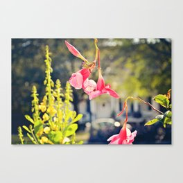 Pink Manor Canvas Print