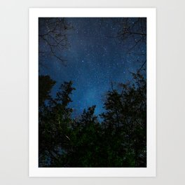 Stars above the Forest Art Print