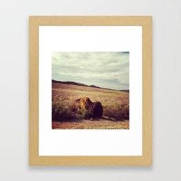 Sunbathing Bison Framed Art Print