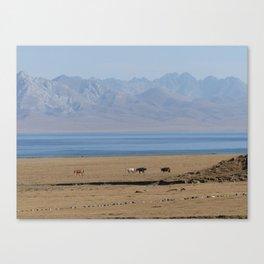 Wild horses at lake Song Kul, Kyrgyzstan Canvas Print