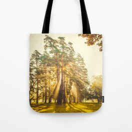 Morning sun beams in the autumn park Tote Bag