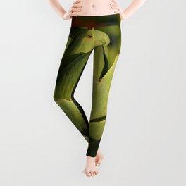 Artichoke Leggings