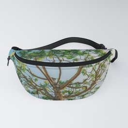 Maritime pine in French Riviera in a sunny winter day Fanny Pack