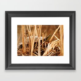 Painted Turtle Sunning Itself In Reeds Framed Art Print