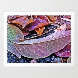 Water Droplets on Leaves Art Print