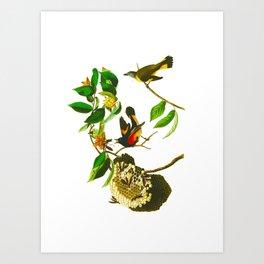 Vintage Scientific Bird & Botanical Illustration Art Print