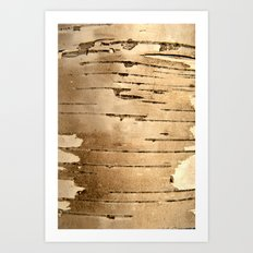 Silver birch bark  Art Print