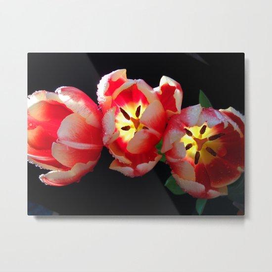 Trio Tulips Metal Print