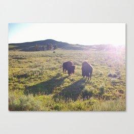 Wild Buffalo Canvas Print