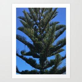 nz tree Art Print