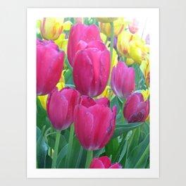 Sweet Spring Tulips Art Print