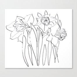 Daffodil Sketch Canvas Print