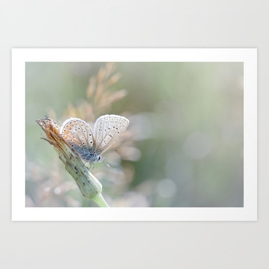 Sunbathing butterfly... (blue version) Art Print