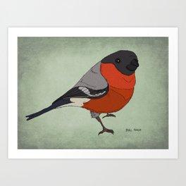 The Bullfinch Art Print