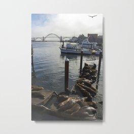 newport sea lion docks Metal Print